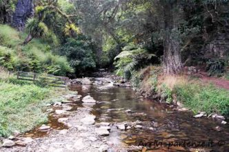 Torrente nei pressi delle Waitomo Caves, Nuova Zelanda