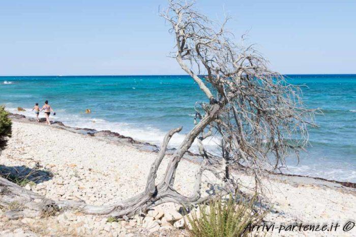 Spiaggia nell'Oasi di Biderosa, Sardegna (2)